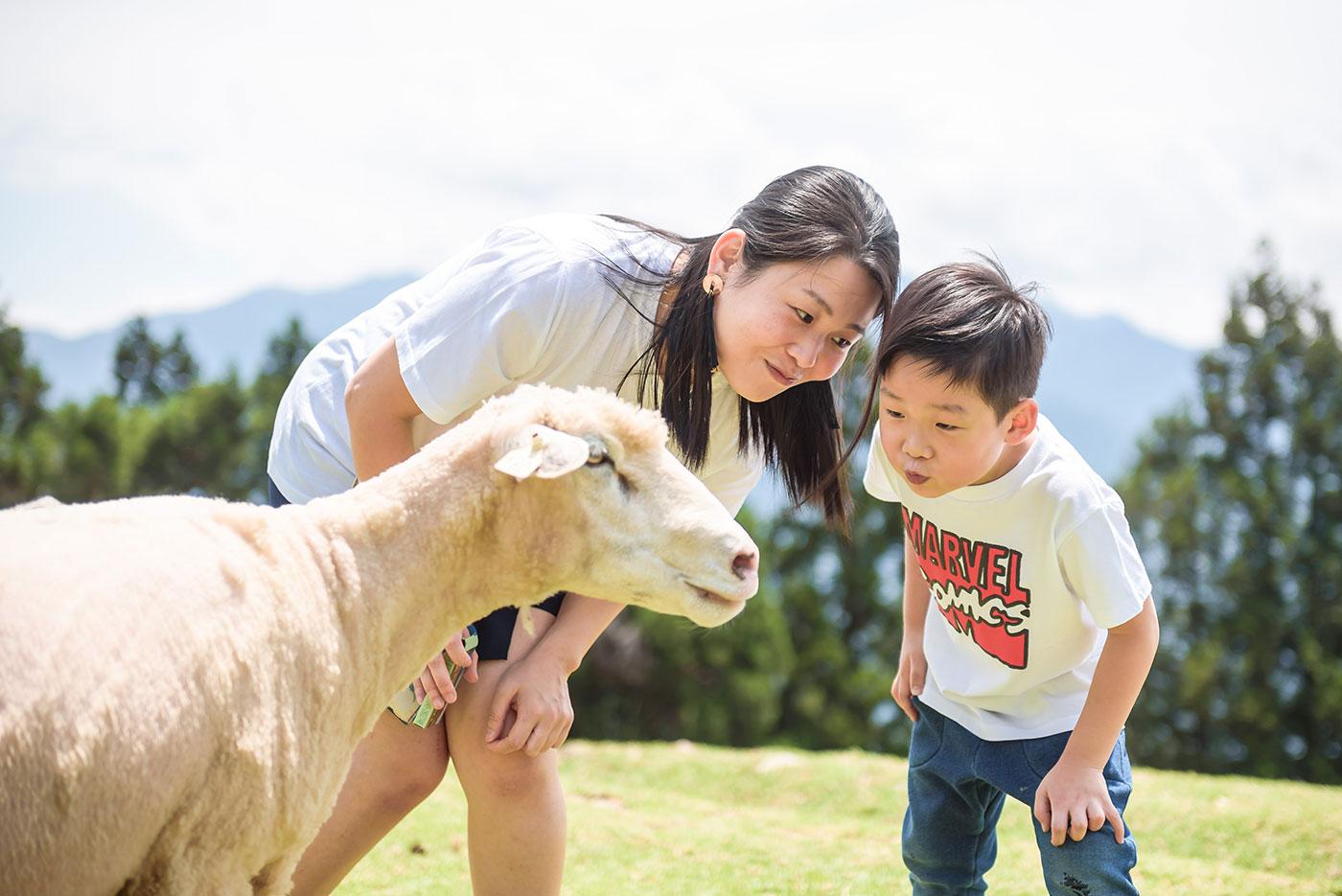 親子旅拍 海外親子旅拍 清境農場旅拍 旅遊寫真 餵羊